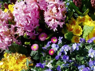 Blumenbeet Frühjahr